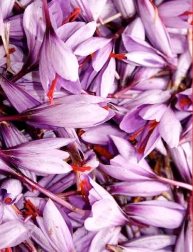 azafrán flores