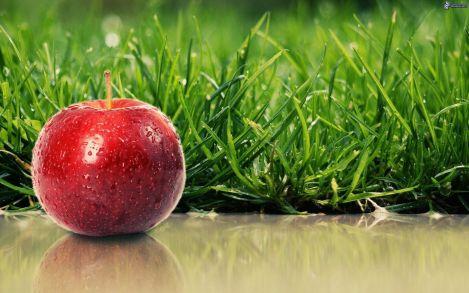manzana-roja,-hierba-170415